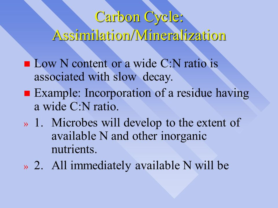 Carbon Cycle: Assimilation/Mineralization