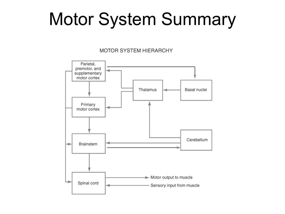 Motor System Summary