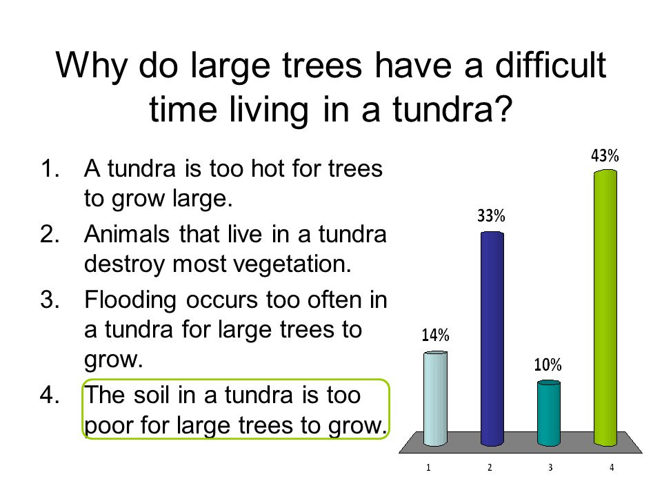 Why do large trees have a difficult time living in a tundra