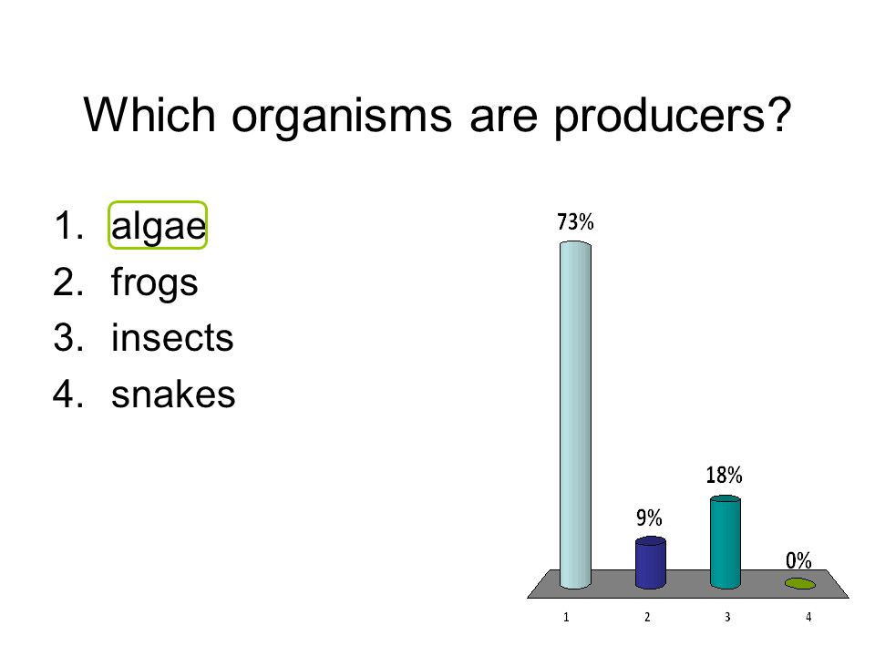 Which organisms are producers