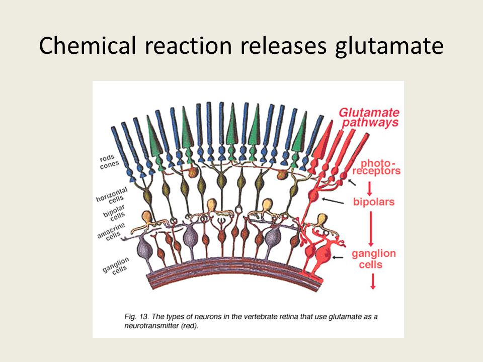Chemical reaction releases glutamate