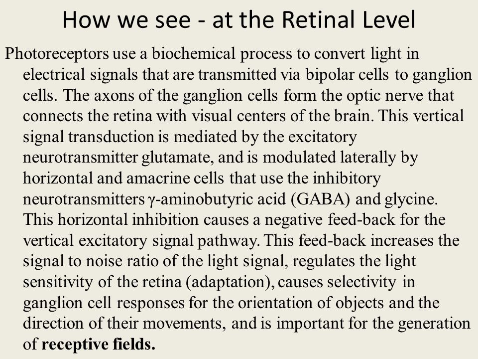 How we see - at the Retinal Level