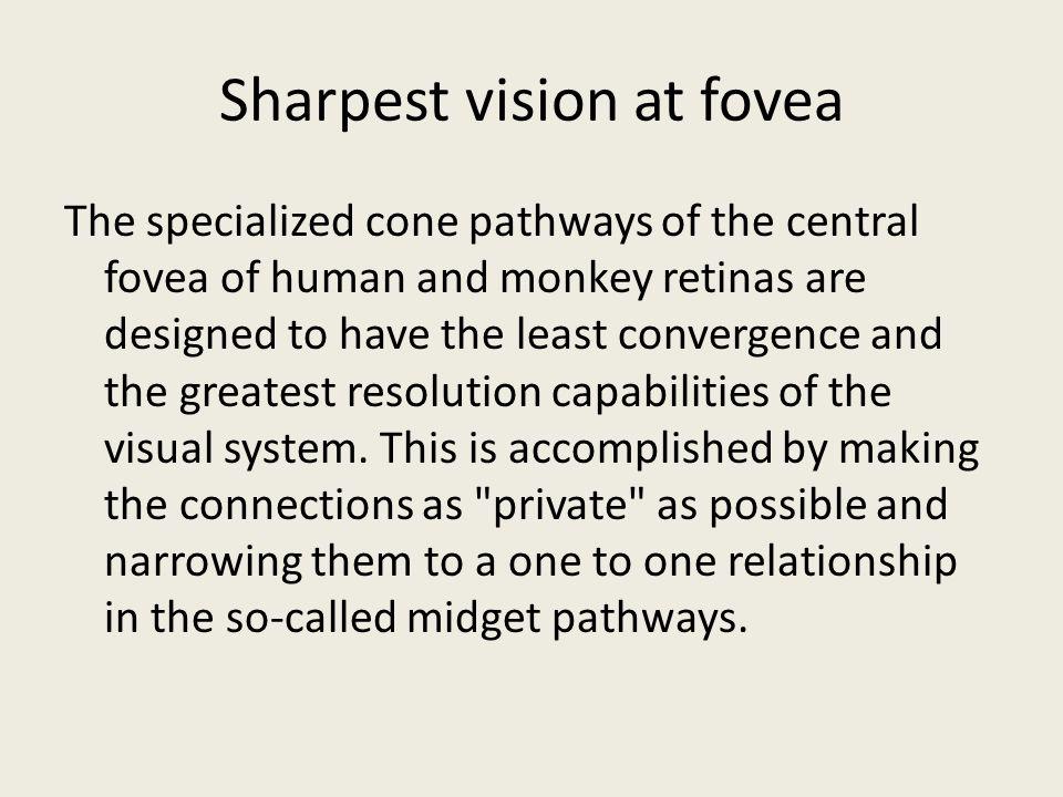 Sharpest vision at fovea