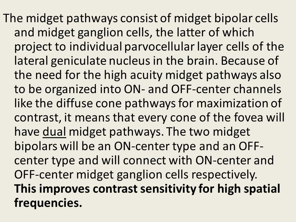 The midget pathways consist of midget bipolar cells and midget ganglion cells, the latter of which project to individual parvocellular layer cells of the lateral geniculate nucleus in the brain.