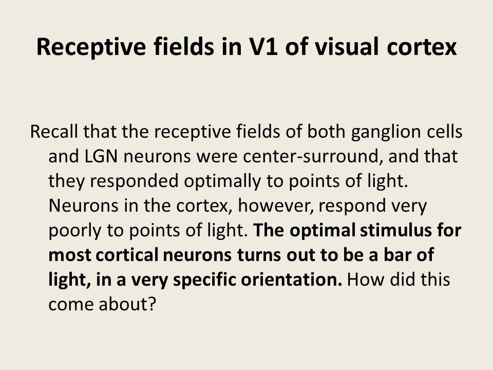 Receptive fields in V1 of visual cortex
