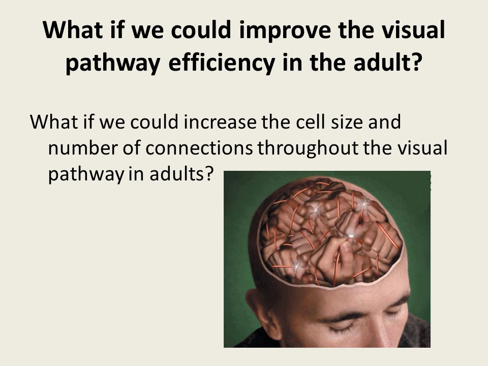 What if we could improve the visual pathway efficiency in the adult