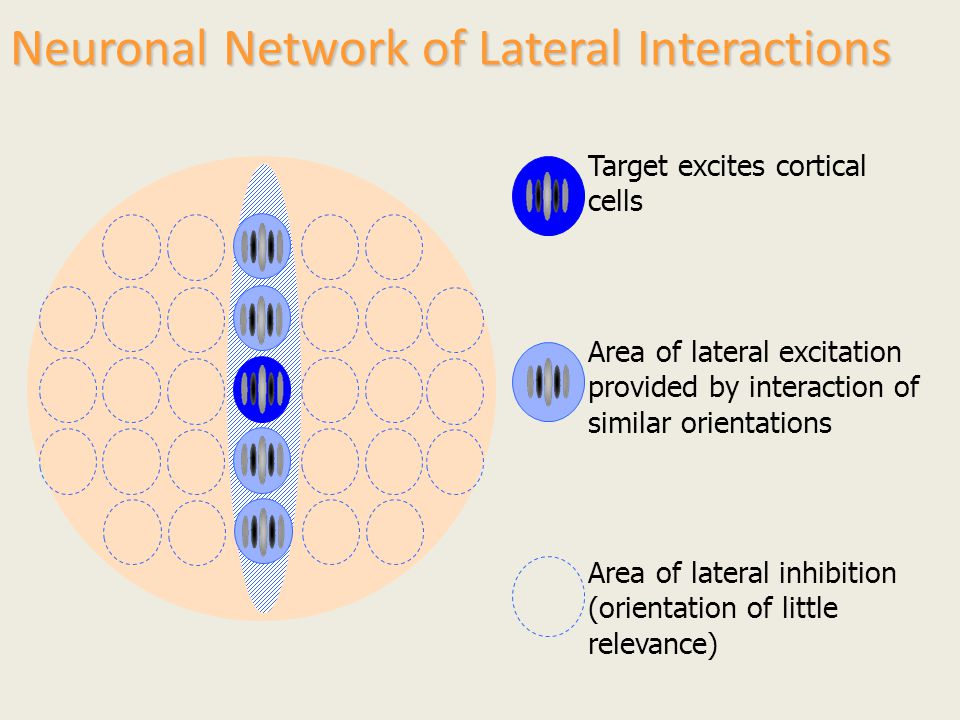 Neuronal Network of Lateral Interactions