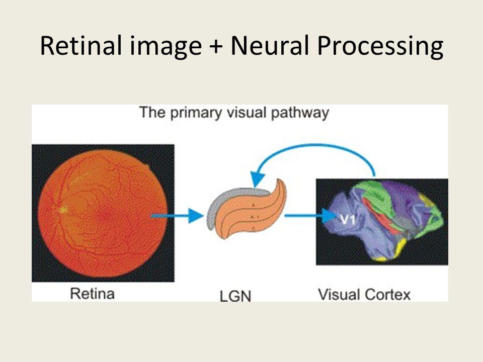Retinal image + Neural Processing