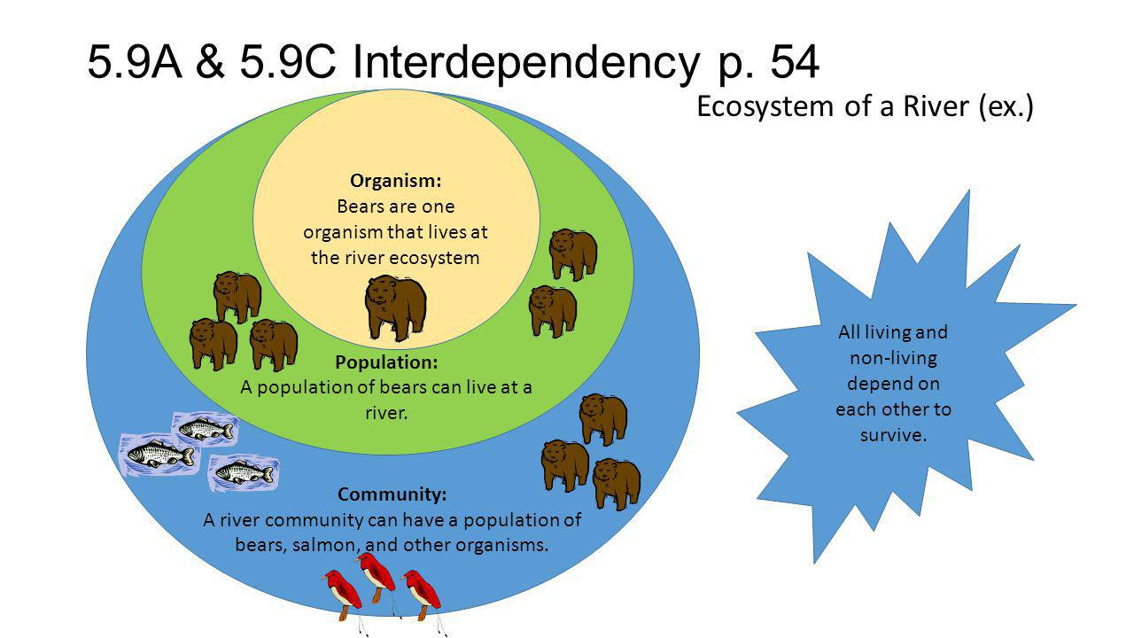 5.9A & 5.9C Interdependency p. 54 Ecosystem of a River (ex.) Organism: