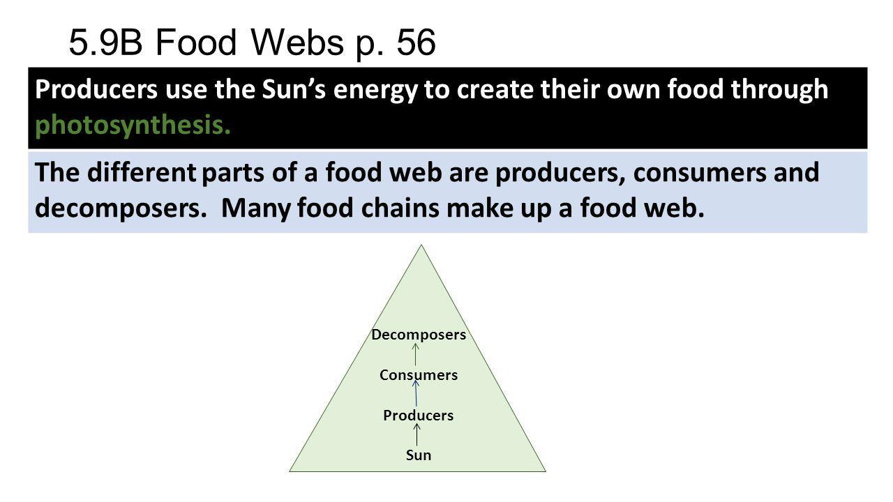 5.9B Food Webs p. 56 Producers use the Sun's energy to create their own food through photosynthesis.