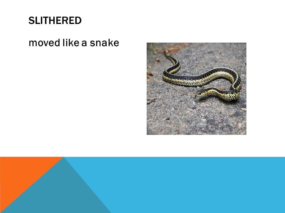 Slithered moved like a snake