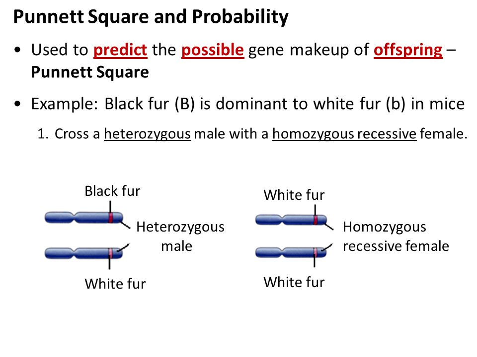 Punnett Square and Probability