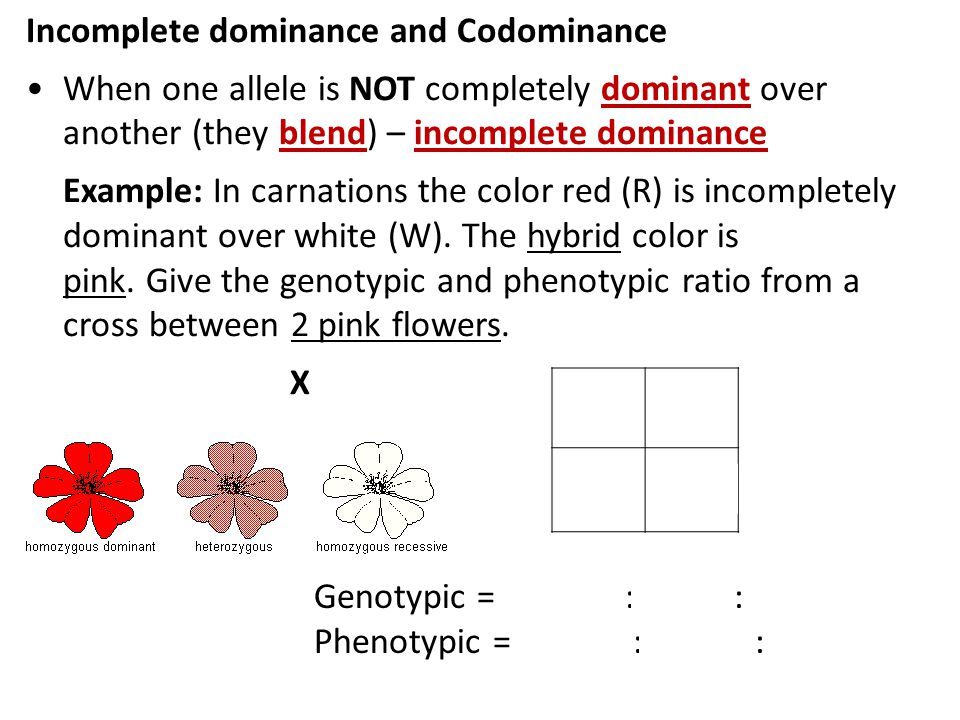 incomplete dominance and codominance worksheet answers - Khafre