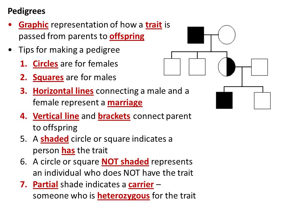 Pedigrees Graphic representation of how a trait is passed from parents to offspring. Tips for making a pedigree.