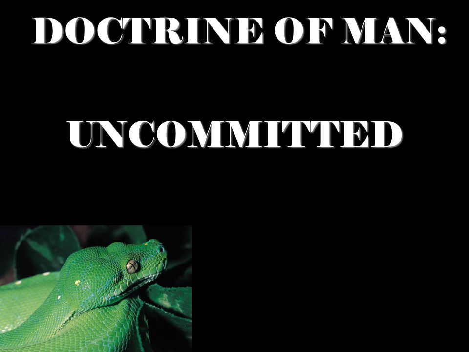 DOCTRINE OF MAN: UNCOMMITTED