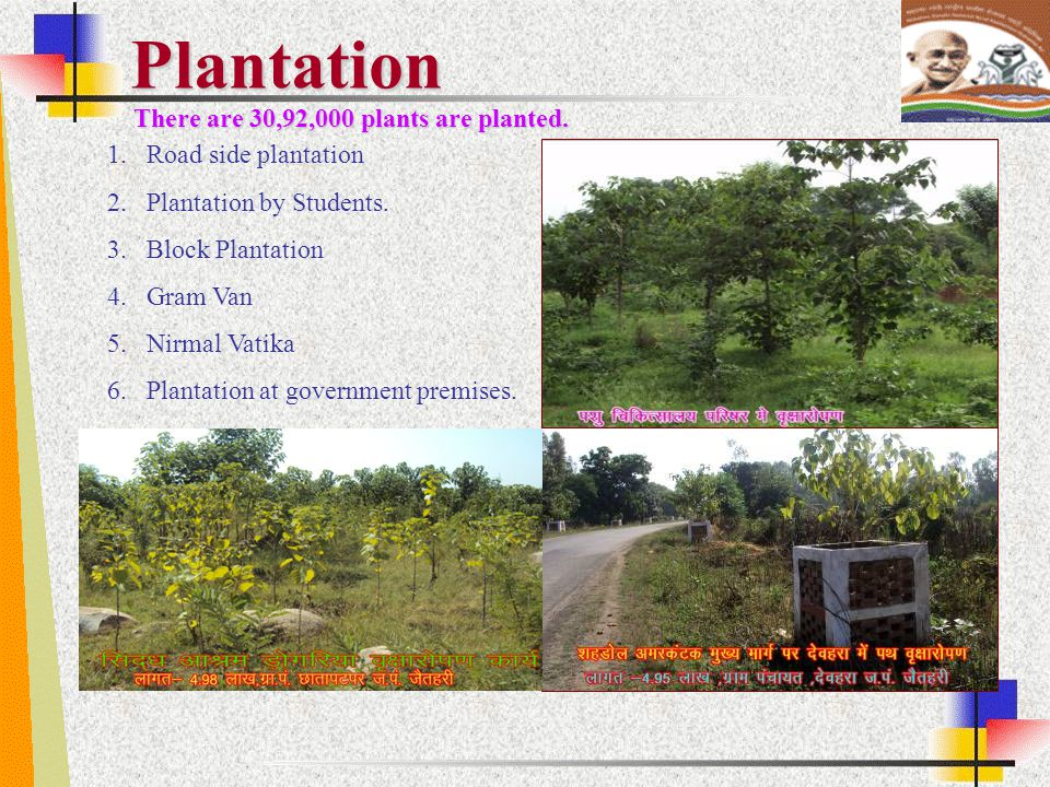 Plantation There are 30,92,000 plants are planted.