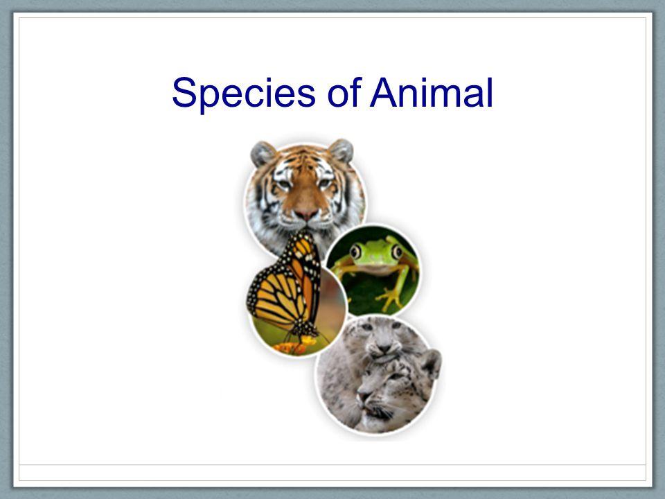 Species of Animal Discrete Categorical
