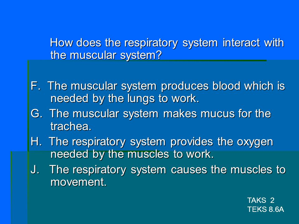 How does the respiratory system interact with the muscular system