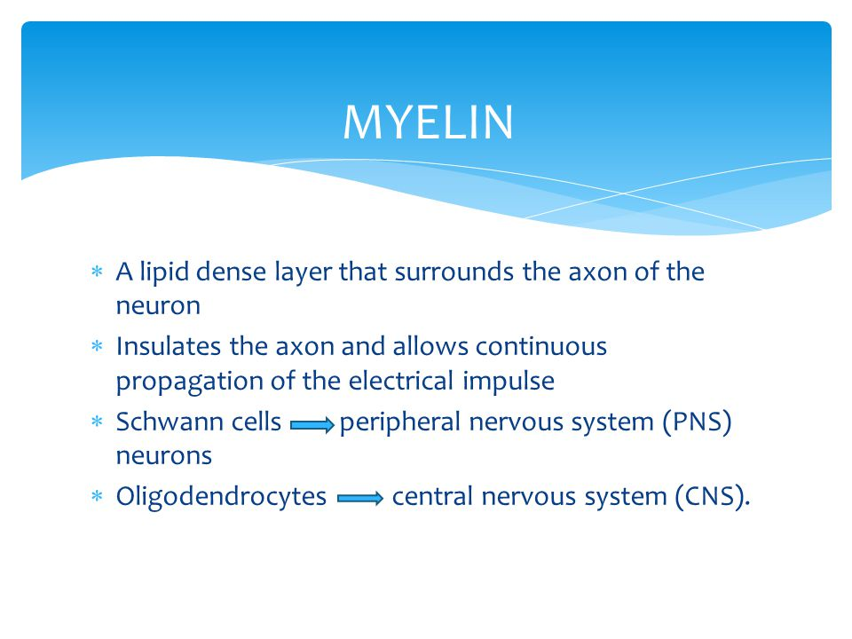 MYELIN A lipid dense layer that surrounds the axon of the neuron