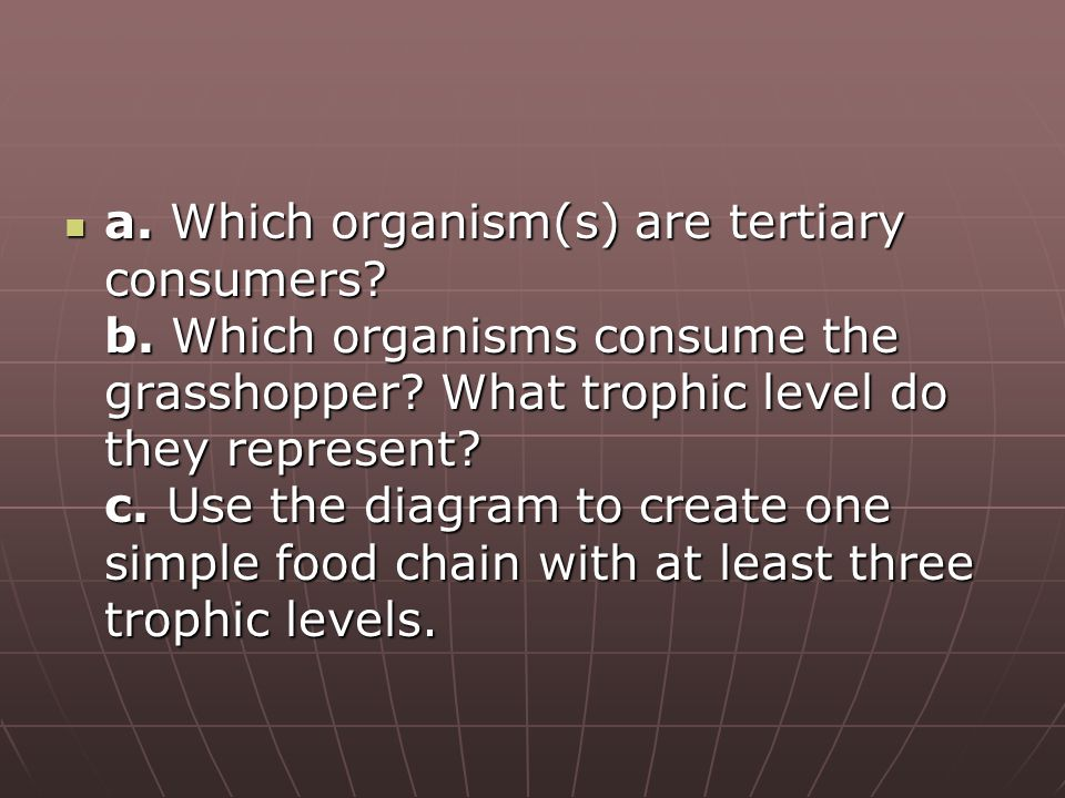 a. Which organism(s) are tertiary consumers. b