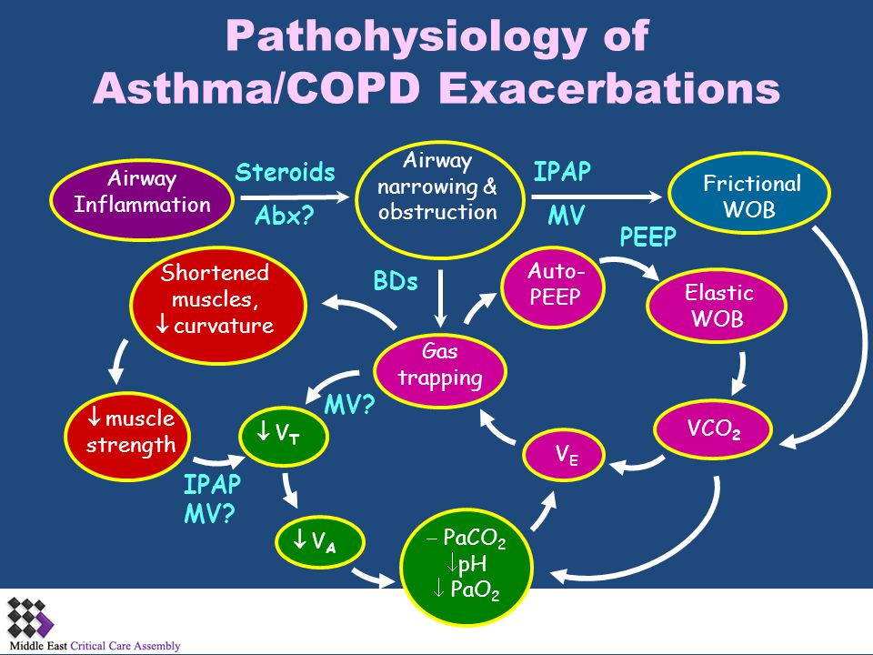 Pathohysiology of Asthma/COPD Exacerbations