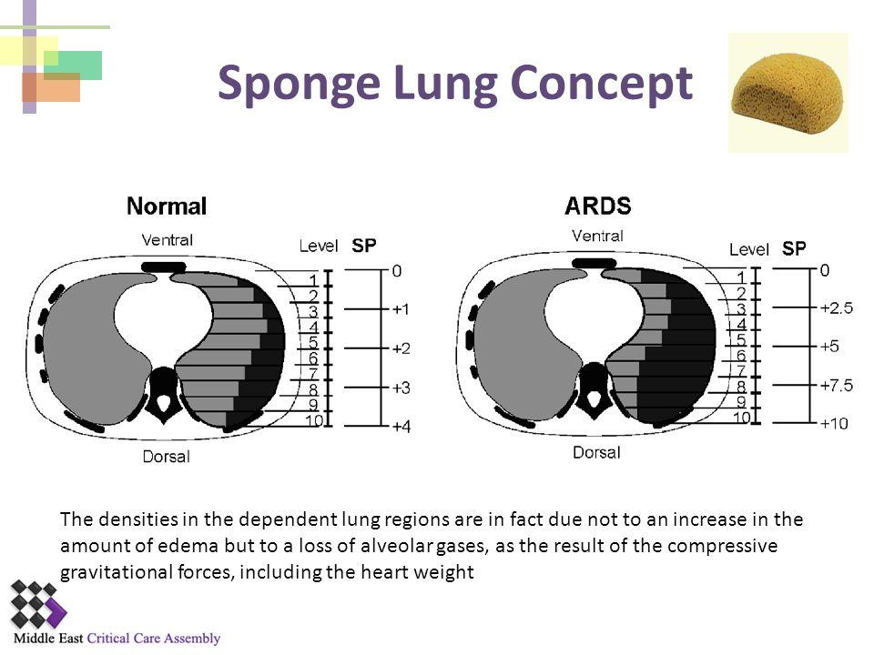 Sponge Lung Concept