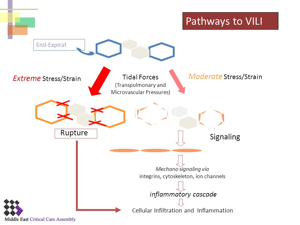 Pathways to VILI Moderate Stress/Strain Extreme Stress/Strain Rupture