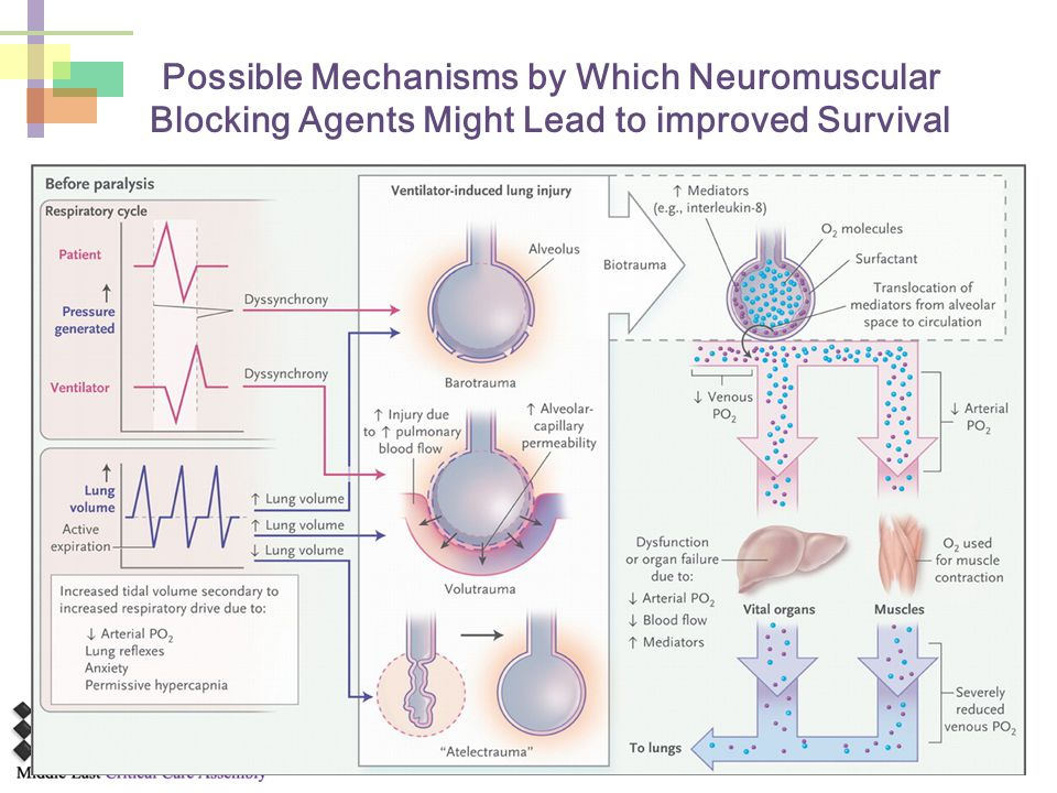 Possible Mechanisms by Which Neuromuscular Blocking Agents Might Lead to improved Survival
