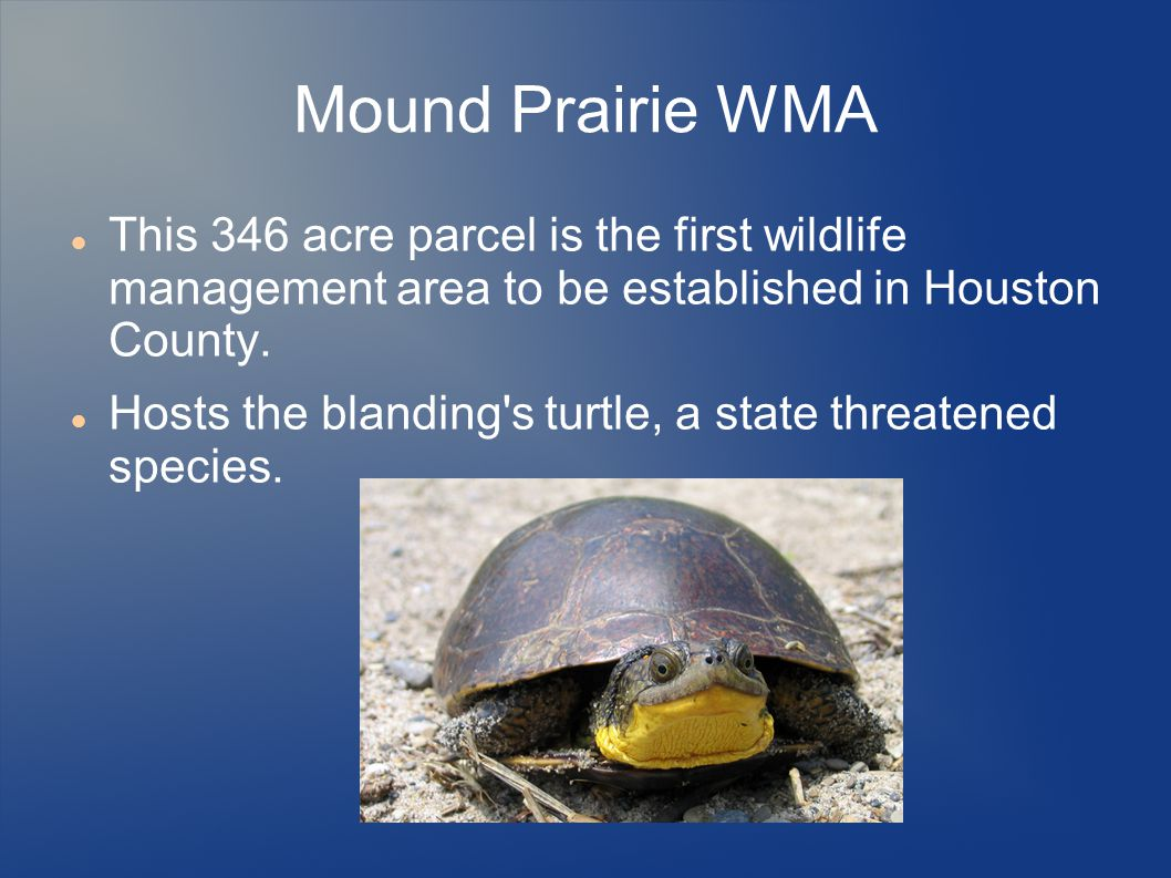 Mound Prairie WMA This 346 acre parcel is the first wildlife management area to be established in Houston County.