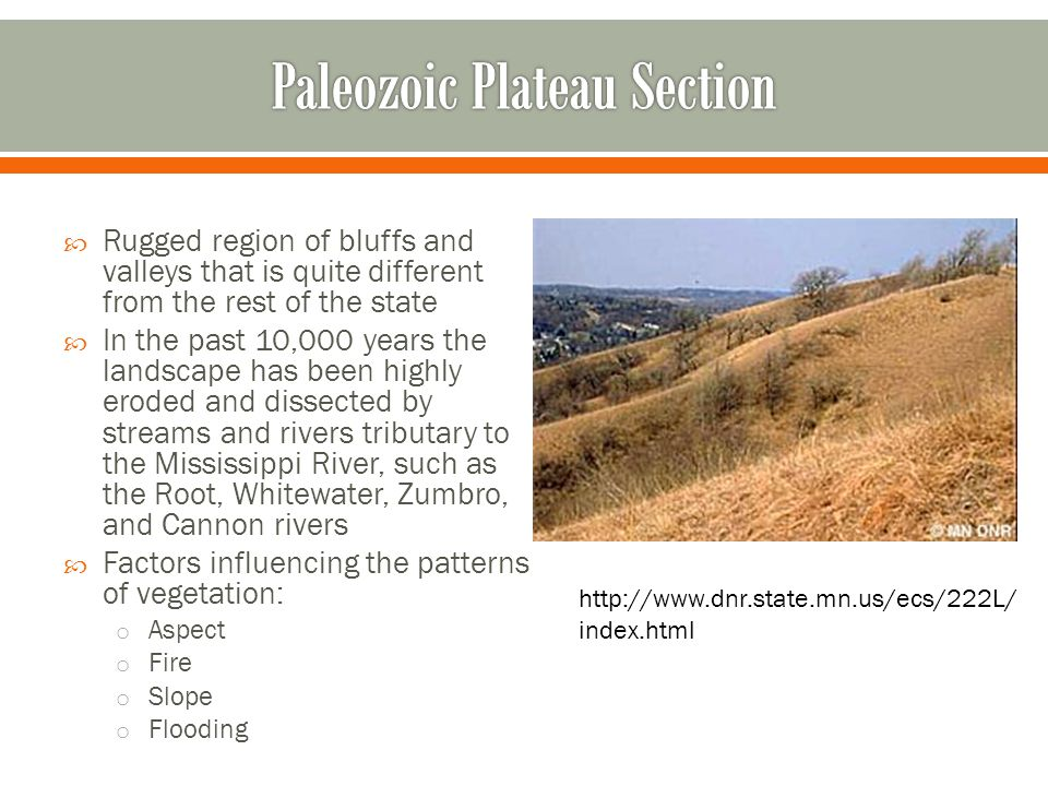 Paleozoic Plateau Section