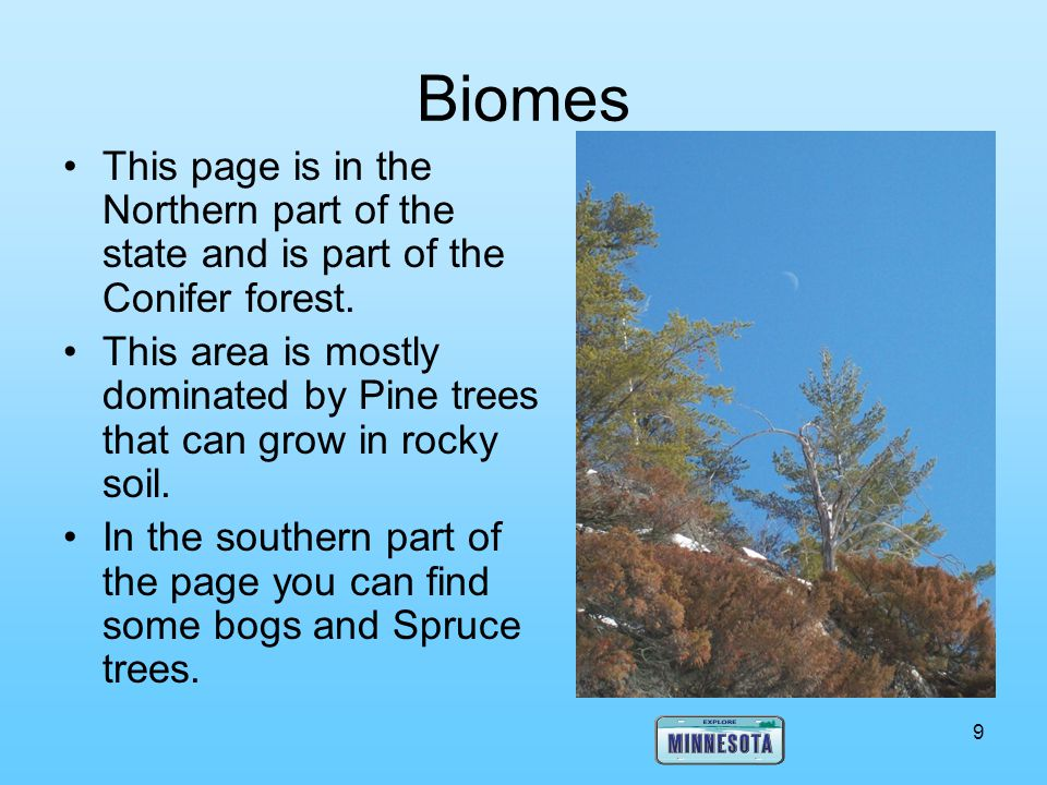 Biomes This page is in the Northern part of the state and is part of the Conifer forest.