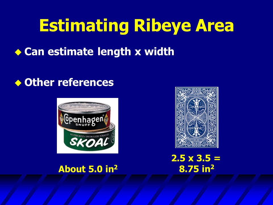 Estimating Ribeye Area