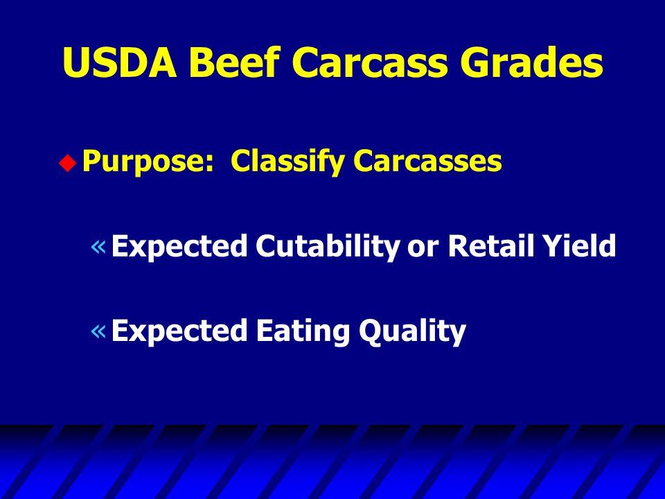 USDA Beef Carcass Grades