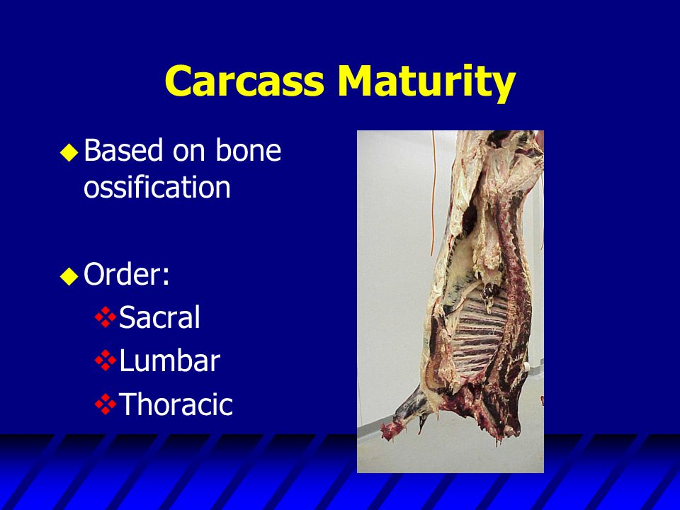 Carcass Maturity Based on bone ossification Order: Sacral Lumbar