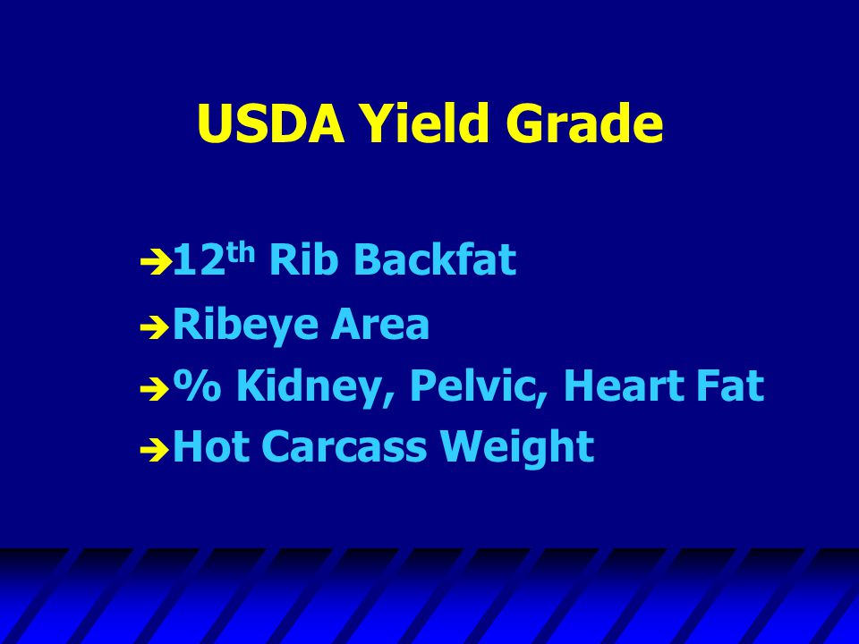 USDA Yield Grade 12th Rib Backfat Ribeye Area