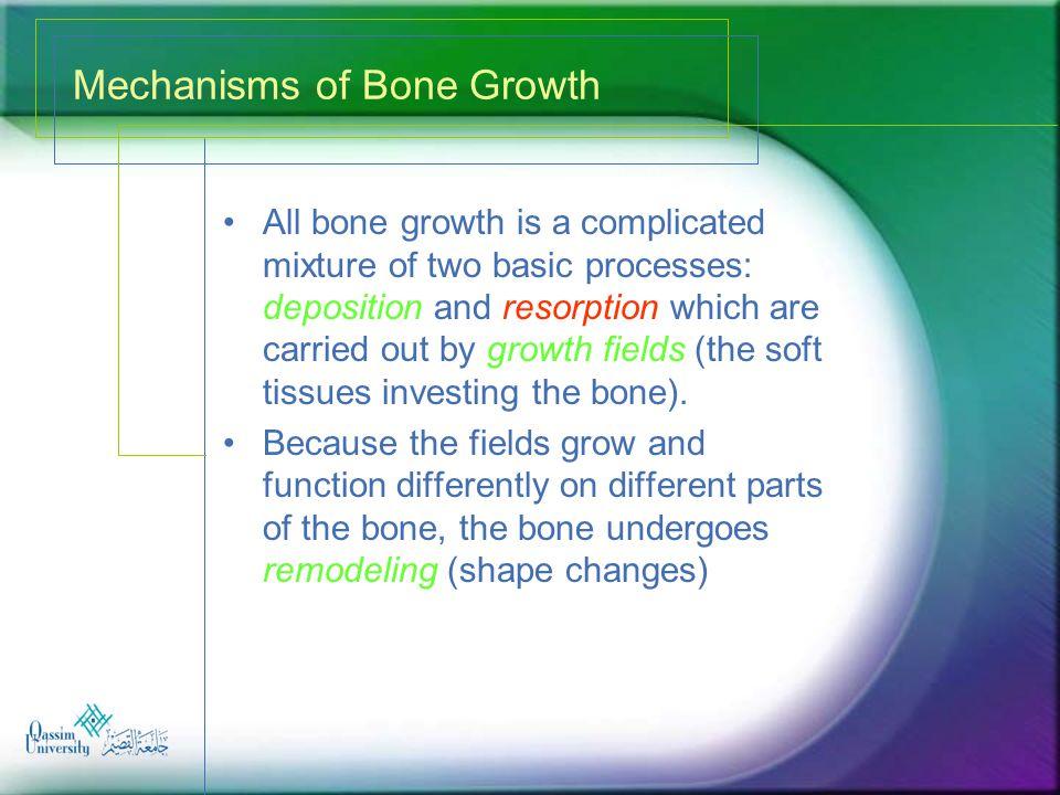 Mechanisms of Bone Growth