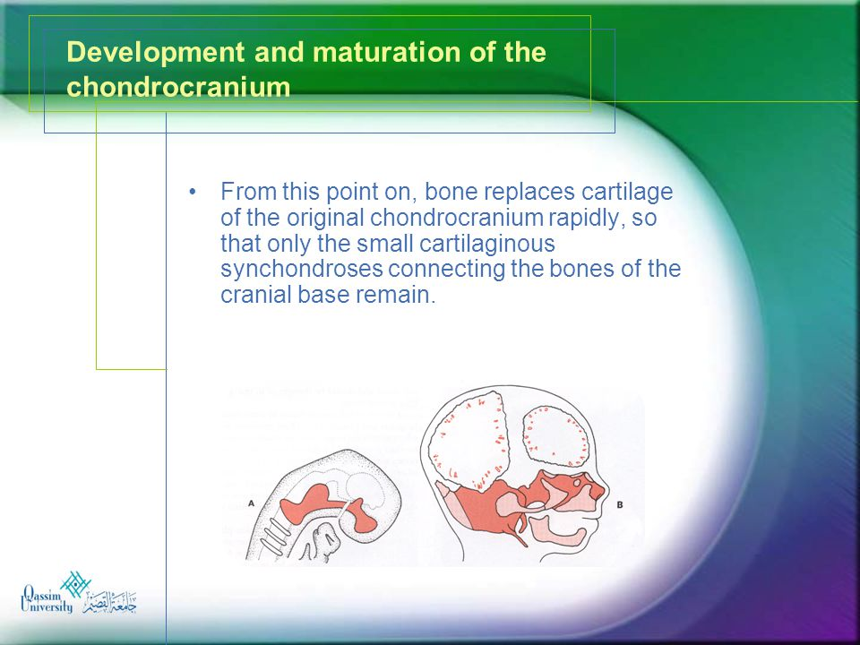 Development and maturation of the chondrocranium