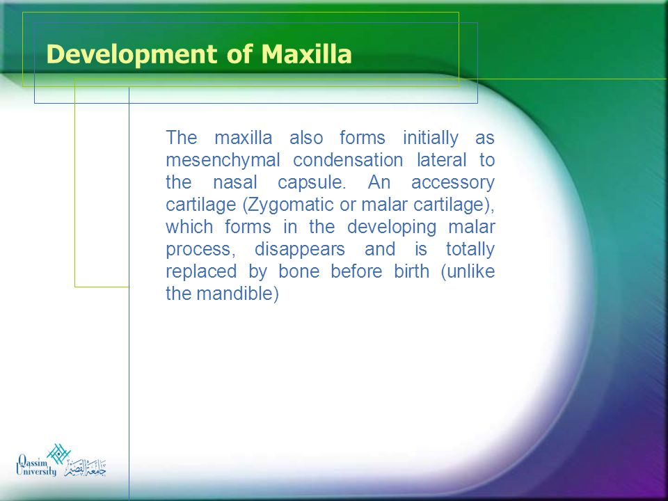 Development of Maxilla