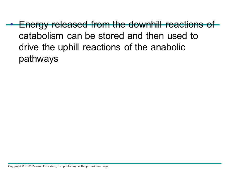 Energy released from the downhill reactions of catabolism can be stored and then used to drive the uphill reactions of the anabolic pathways