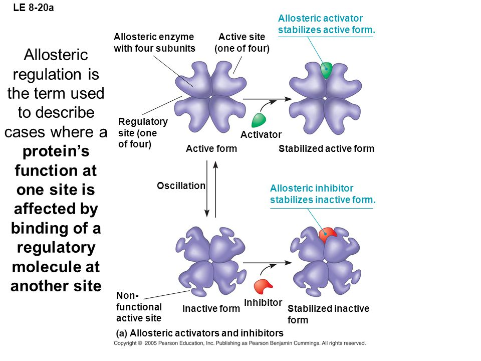 LE 8-20a Allosteric activator. stabilizes active form. Allosteric enzyme. with four subunits. Active site.