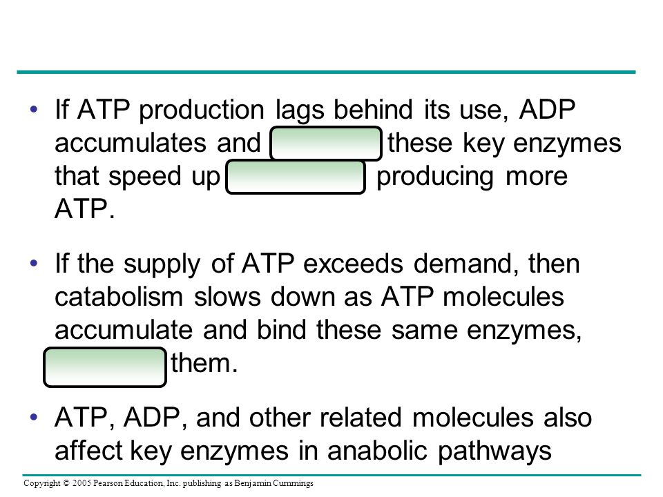 If ATP production lags behind its use, ADP accumulates and activates these key enzymes that speed up catabolism, producing more ATP.