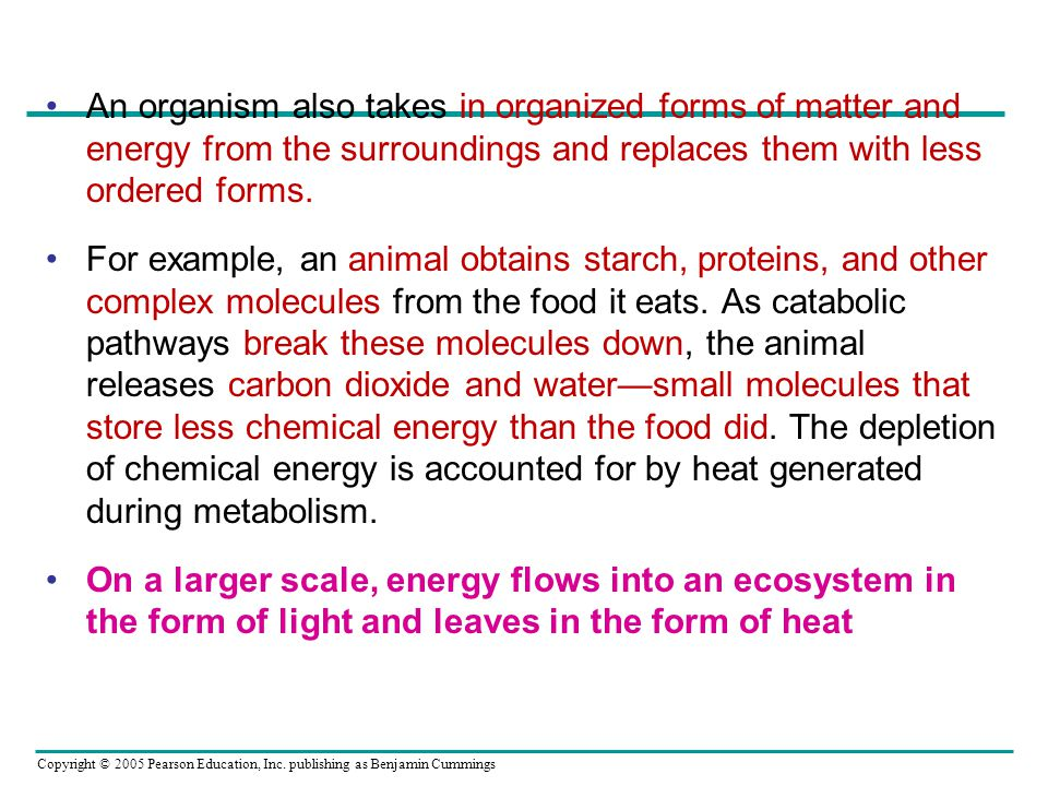 An organism also takes in organized forms of matter and energy from the surroundings and replaces them with less ordered forms.