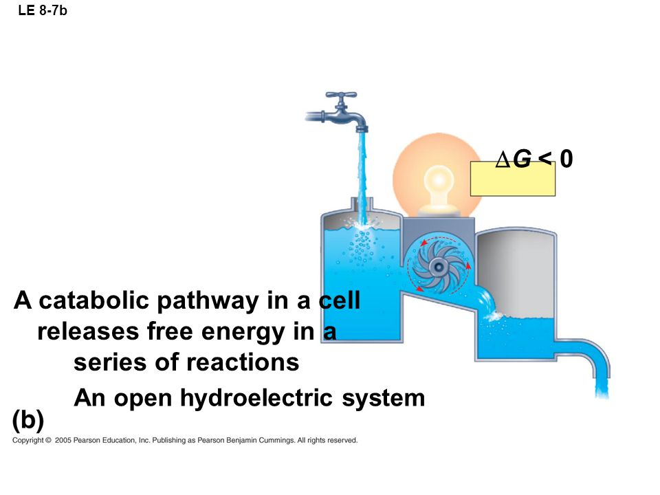 LE 8-7b G < 0. A catabolic pathway in a cell releases free energy in a series of reactions.