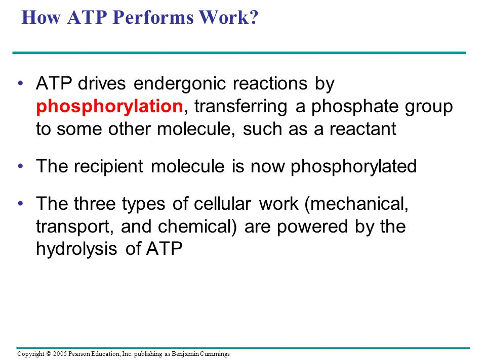 How ATP Performs Work ATP drives endergonic reactions by phosphorylation, transferring a phosphate group to some other molecule, such as a reactant.