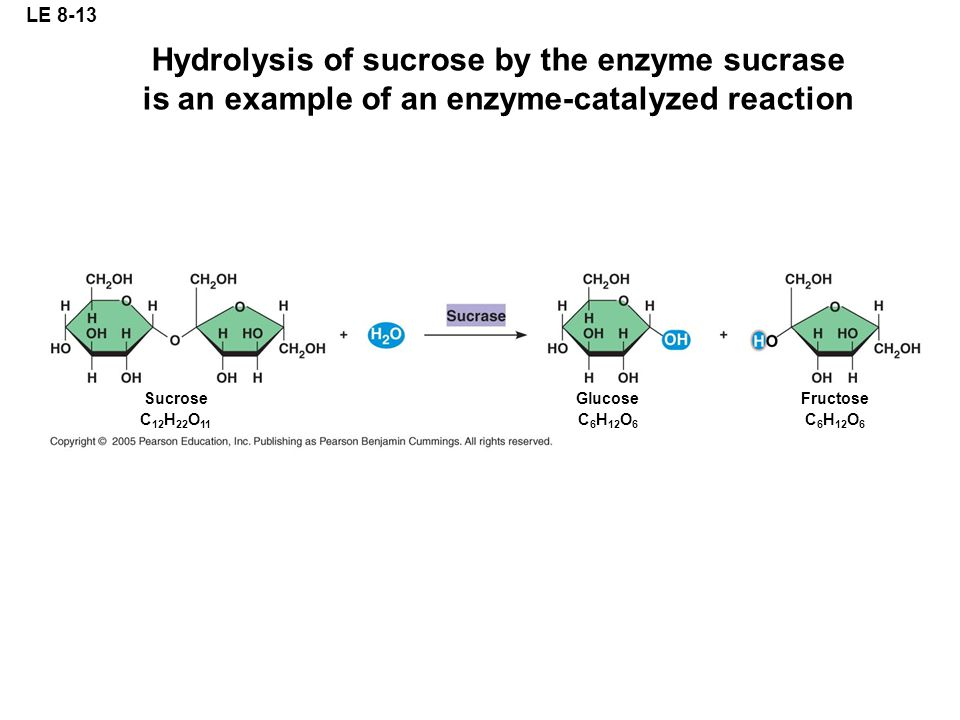 LE 8-13 Hydrolysis of sucrose by the enzyme sucrase is an example of an enzyme-catalyzed reaction. Sucrose.