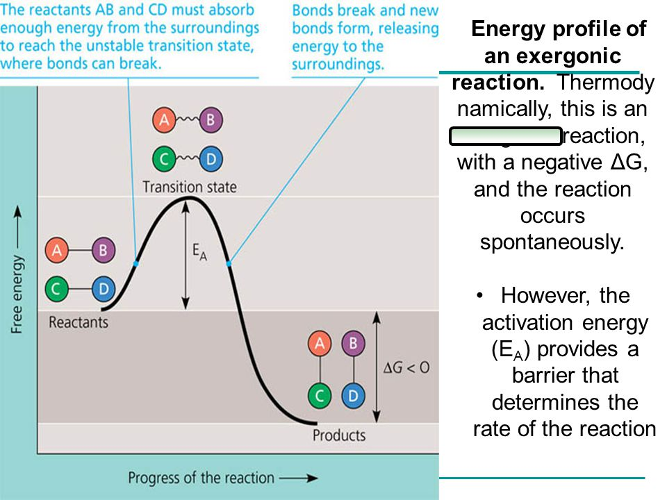 Energy profile of an exergonic reaction