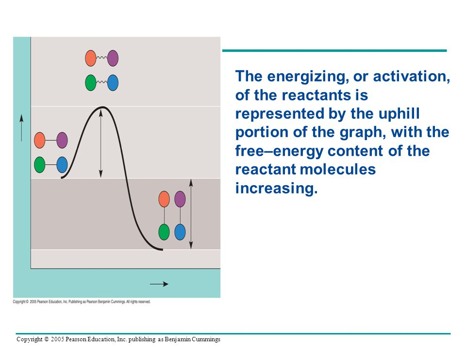 The energizing, or activation, of the reactants is represented by the uphill portion of the graph, with the free–energy content of the reactant molecules increasing.