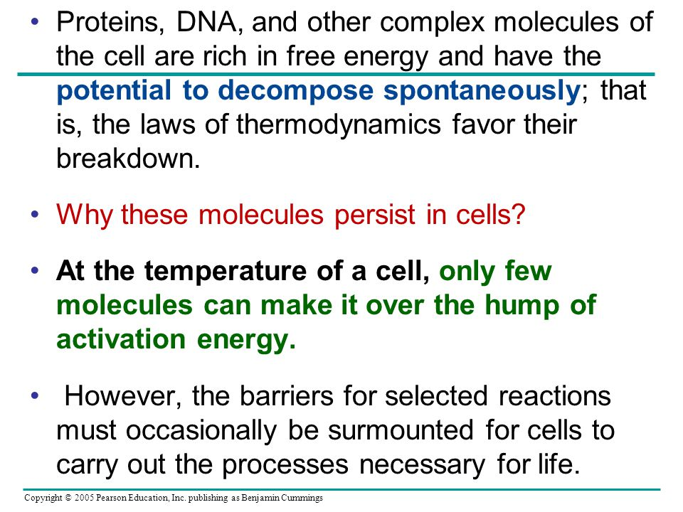 Proteins, DNA, and other complex molecules of the cell are rich in free energy and have the potential to decompose spontaneously; that is, the laws of thermodynamics favor their breakdown.