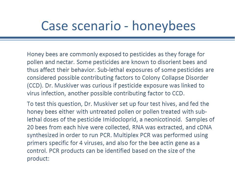 Case scenario - honeybees