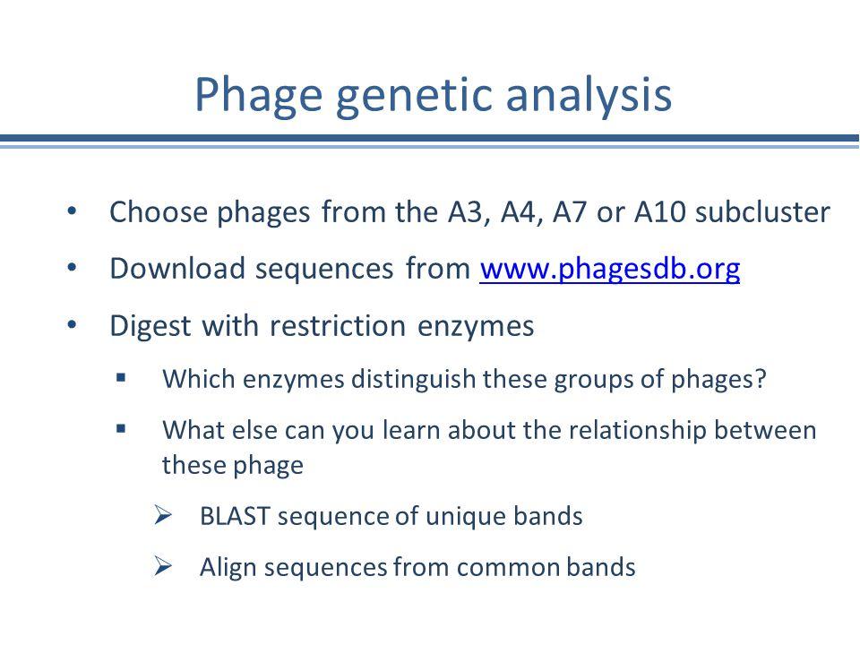 Phage genetic analysis